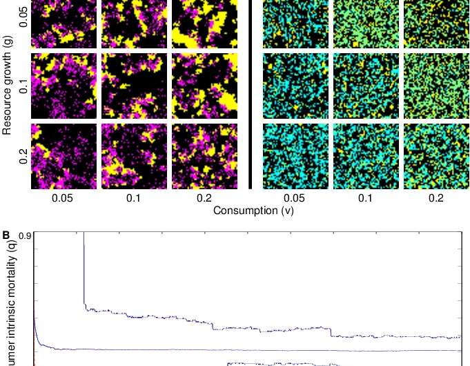Ascendance studies favor intrinsic mortality in numerical simulations with a spatial model