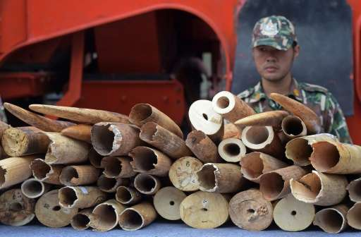 A security guard stands next to pieces of ivory on display during a destruction of confiscated ivory exercise at Thailand's Depa