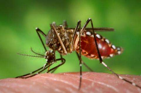 Asthma drug against dengue to be tested in clinical trial