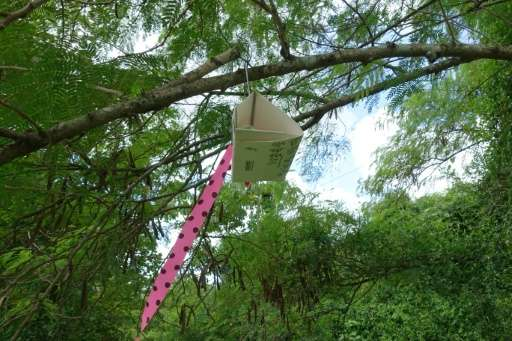 A trap to attract male Oriental fruit flies hangs on a tree at the edge of the quarantine zone on October 2, 2015 in Redland, Fl