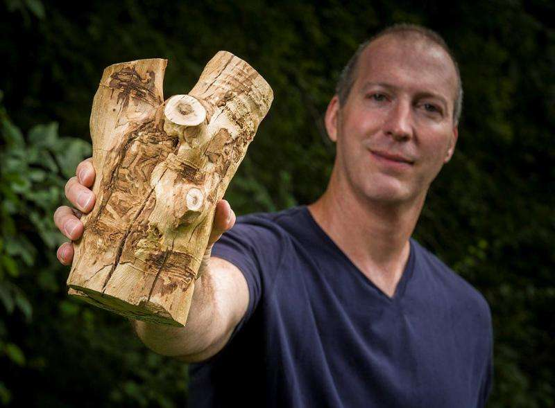 Attack on white fringetree by emerald ash borer likely to be widespread