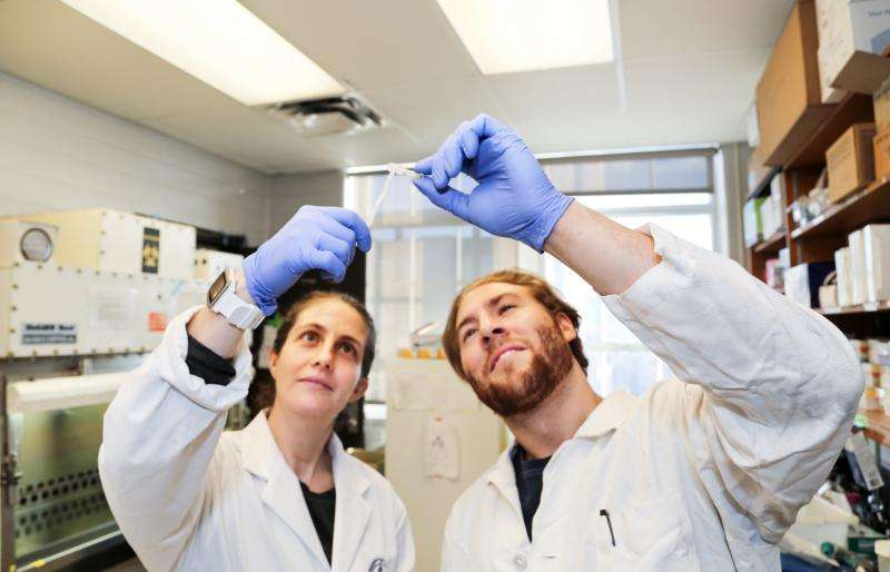 A tumor that can unroll: Engineers create new technology for understanding cancer growth