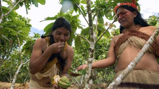 A Waorani indigenous woman eats a cacao fruit in Gareno, Ecuador