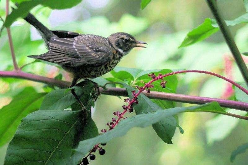 Backyard birds enhance life in urban neighborhoods