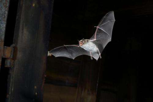 Bats are surprisingly fast decision makers