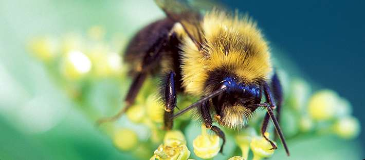 'Bee soup' could help understand declines and test remedies