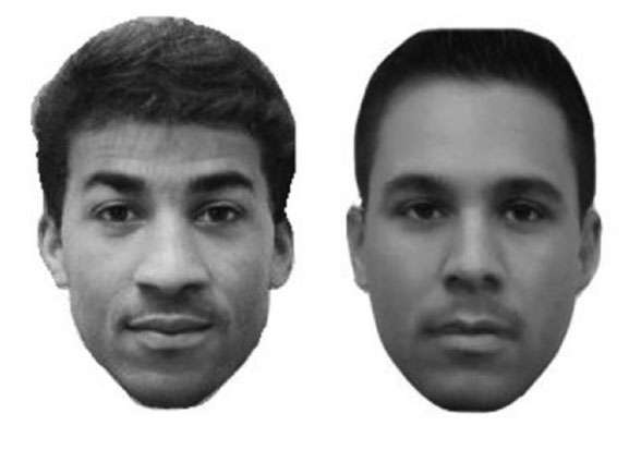 Biases influence how multiracial individuals are categorized
