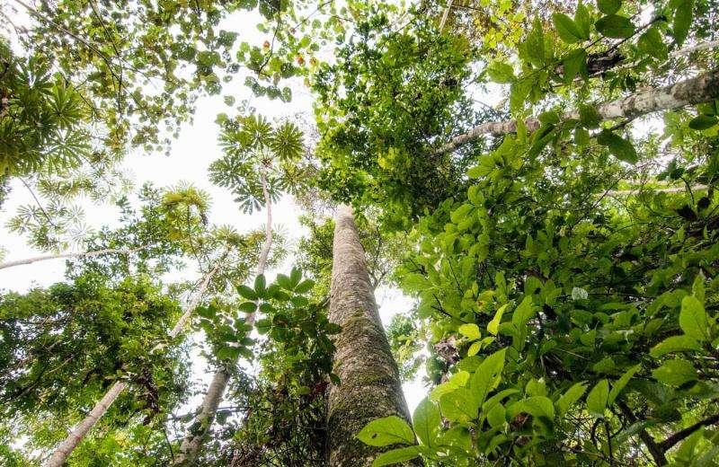 Blacklists protect the rainforest