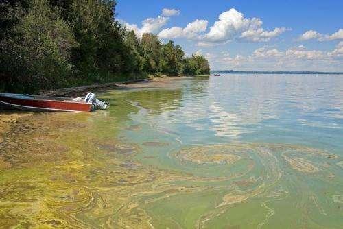 'Blue-green algae' proliferating in lakes