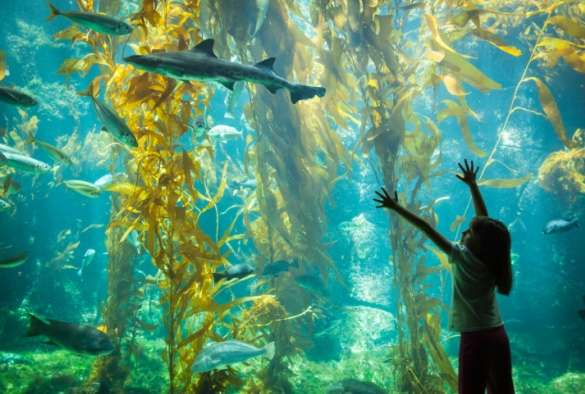 Blue Planet Aquarium to trial world's first automated fish health monitor