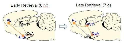 Brain recalls old memories via new pathways