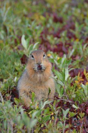 Braving the Cold to Understand What Makes Squirrels Tick