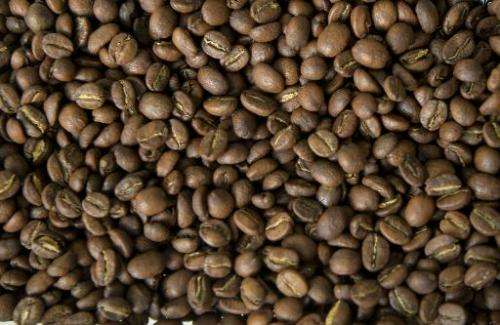 Brazilian scientists have discovered a protein in coffee that has effects similar to pain reliever morphine, researchers at the