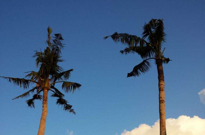 Breeding in the crowns of coconut palms