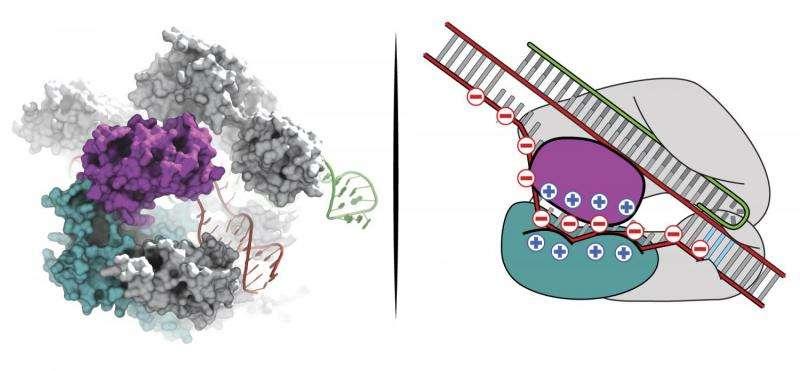 Broad, MIT scientists overcome key CRISPR-Cas9 genome editing hurdle
