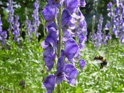 Bumblebees make false memories too