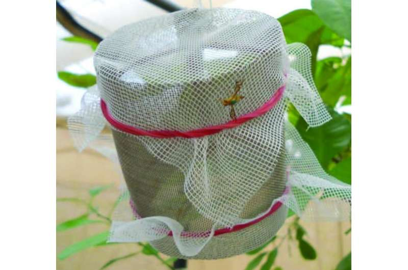 Cage the fly: Walk-in field cages to assess mating compatibility in pest fruit flies