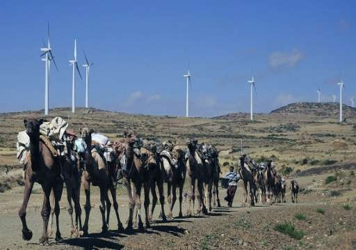 Camels walk past a wind farm in Ethiopia's northern Tigray region