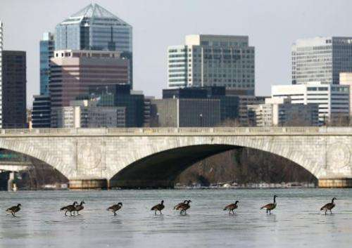 Canadian Geese walk across the frozen Potomac River with the Memorial Bridge and Rosslyn, Va. in the background, January 22, 201