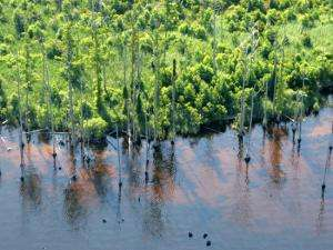 Carbon emissions from peatlands may be less than expected
