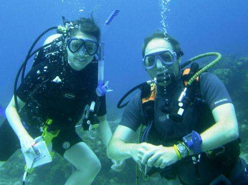 Caribbean coral findings may influence Barrier Reef studies