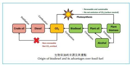 Catalyst for green biodiesel production from unrefined feedstock