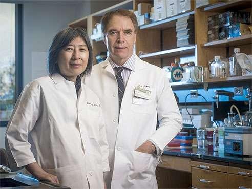 Cells too stiff to scavenge leads to lupus, an autoimmune disease