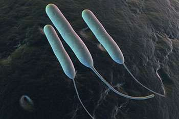 Chemists turn bacterial molecules into potential drug molecules