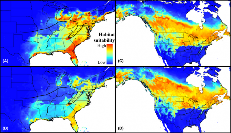Chickadee research predicts drastic northward shift for southern species