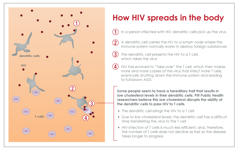 Cholesterol metabolism in immune cells linked to HIV progression, may lead to new therapy