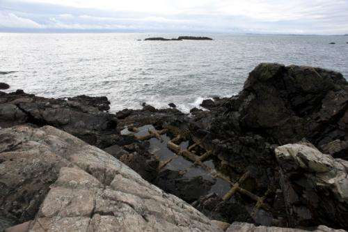 Climate models suggest major changes in coastal marine ecosystems