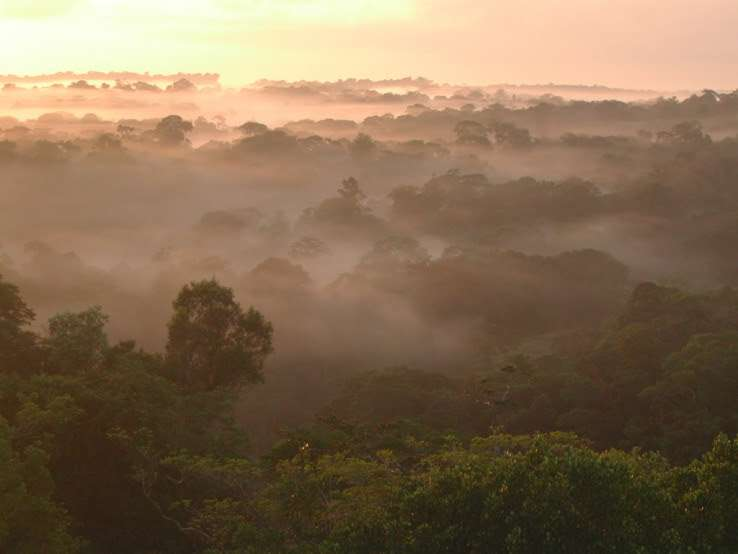 Columbia engineers develop new approach to modeling Amazon seasonal cycles