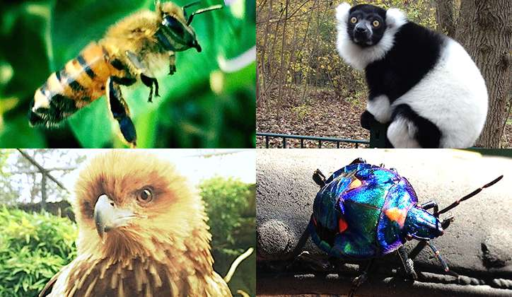 'Common' animal species are not that common and rare species are rare