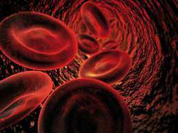 Consuming oily fish could repair damaged blood vessels
