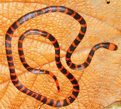 Coral snake venom reveals a unique route to lethality
