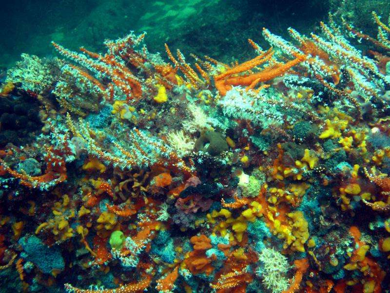 Corals vulnerable to dredging pressures
