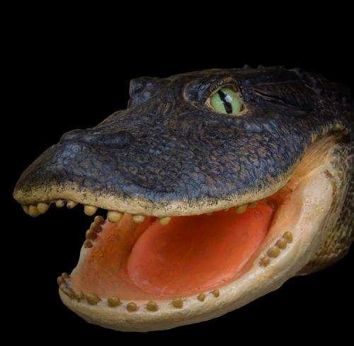 Crocs rocked pre-Amazonian Peru