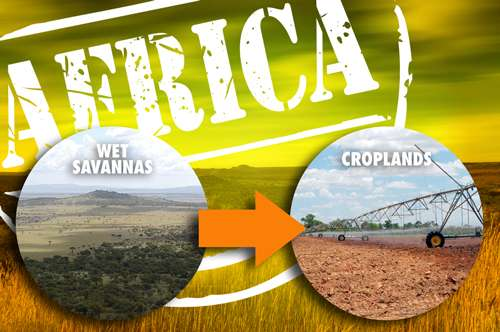 Cropping Africa's wet savannas would bring high environmental costs