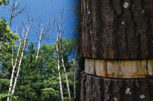 Current forest models are at odds with real-world observations