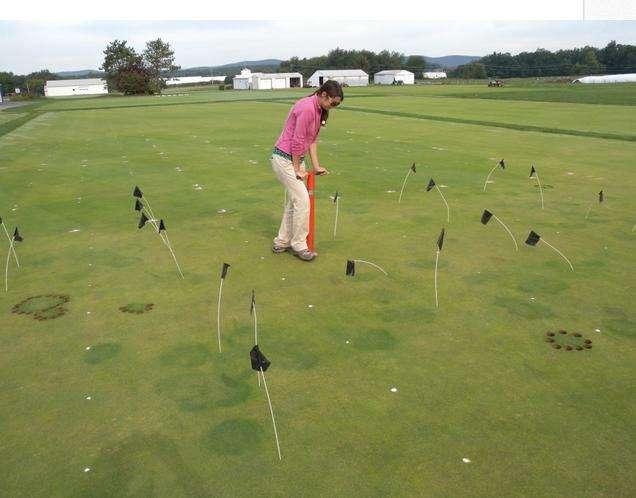 'Déjà vu all over again:' Research shows 'mulch fungus' causes turfgrass disease