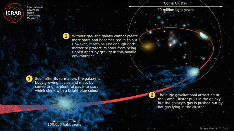 Dead galaxies in Coma Cluster may be packed with dark matter