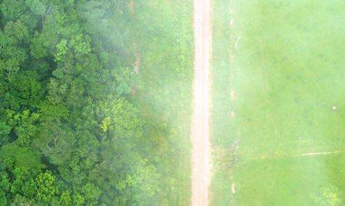 Deforestation is messing with our weather and our food