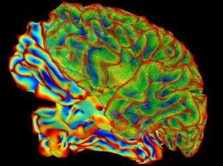 Depolarizing wave may trigger sudden death in epilepsy