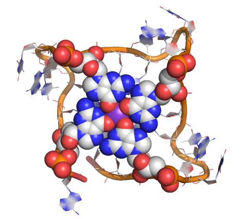 Designer molecule shines a spotlight on mysterious 4-stranded DNA