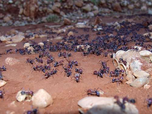 Differences over time in the abundance of ant populations