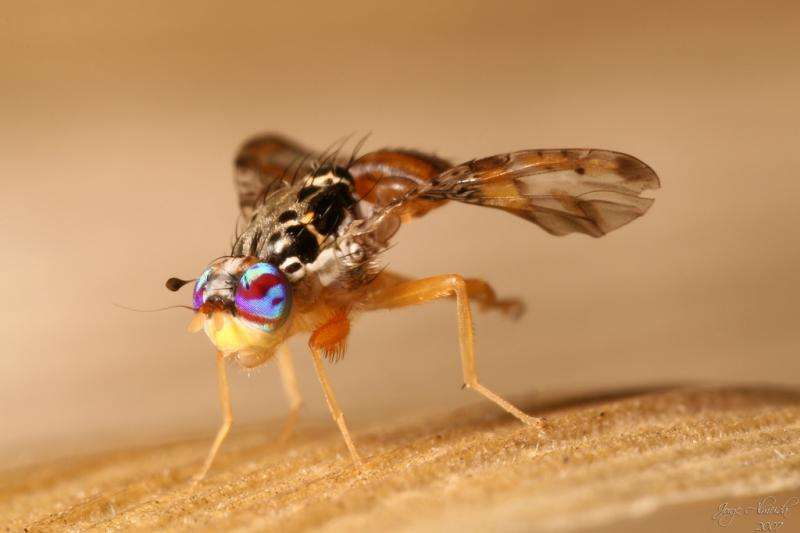 Different tools to deal with medfly pest