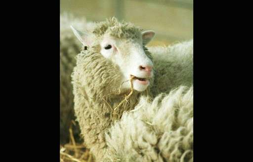 Dolly the sheep—the world's first cloned animal—was born in 1996