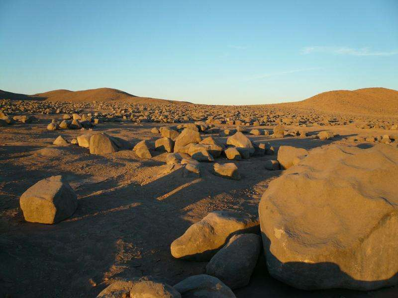 Driest place on Earth hosts life