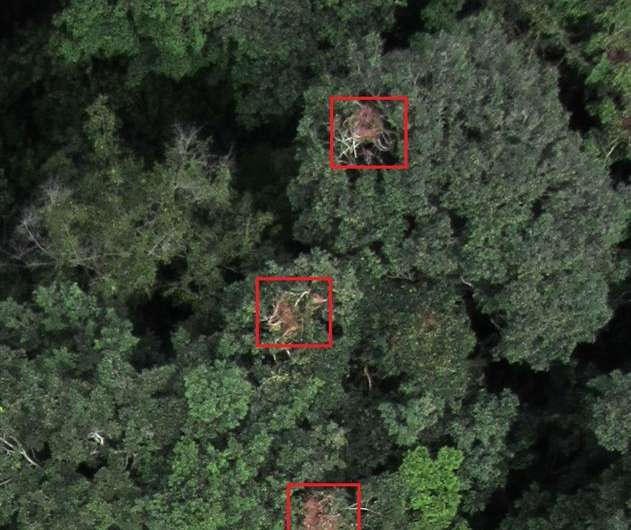 Drones could contribute to saving endangered chimpanzees