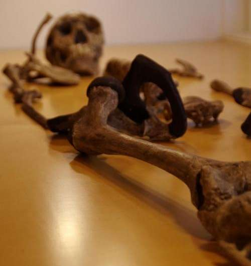 Earliest humans had diverse range of body types, just as we do today